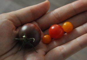 Klettergerüst Tomate : Tomatenvielfalt u unser grünes glück