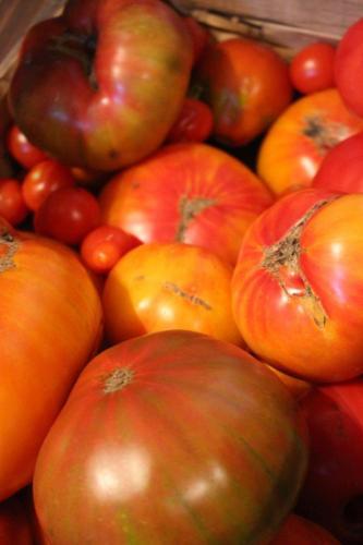 samenfeste Sorten, Tomatenraritäten zeigen ihre Einmaligkeit